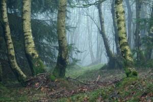 Klicken Sie auf das Bild des Tages im Fotoportal: Im Birkenwäldchen – © VDNJörg Willems - Rothaargebirge