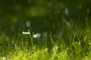 Im Regen – (c)VDNHellwig - Lauenburgische Seen