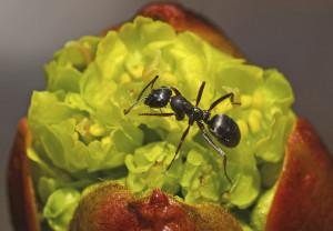 Klicken Sie auf das Bild des Tages im Fotoportal: Im Salat... – © VDNH.Schier - Wildeshauser Geest