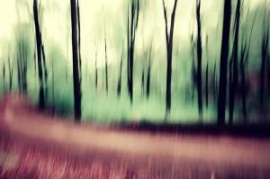 Klicken Sie auf das Bild des Tages im Fotoportal: Im Wald – © VDN DeisAndrea - Bergstraße-Odenwald