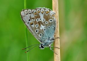 Klicken Sie auf das Bild des Tages im Fotoportal: Insekt des Jahres 2015 - Das Männchen – © VDNSiegfried A. Walter - Unteres Saaletal