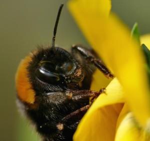 Klicken Sie auf das Bild des Tages im Fotoportal: Keine Pollenallergie – © VDNFUHO - Hessische Rhön