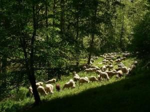 Landschaftspfleger - © VDNSpessarteiche - Spessart