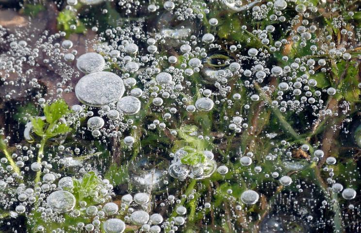 Leben im Eis – © VDNbaude - Deutsch-Belgischer Naturpark Hohes Venn - Eifel