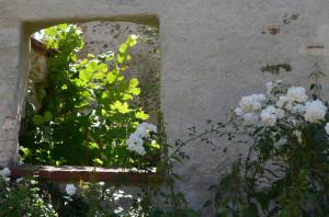 Klicken Sie auf das Bild des Tages im Fotoportal: Leuchtendes Leben vor und zwischen den Burgmauern – © VDNChristine R. Sigl - Bayerischer Wald