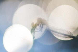 Klicken Sie auf das Bild des Tages im Fotoportal: Libelle in Unschärfekreisen – © VDNBNVH - Holsteinische Schweiz
