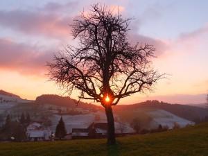 Lichtbaum – © VDNThomas Rist – Südschwarzwald