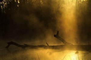 Klicken Sie auf das Bild des Tages im Fotoportal: Lichtgestalt – © VDNMatze - Stromberg-Heuchelberg