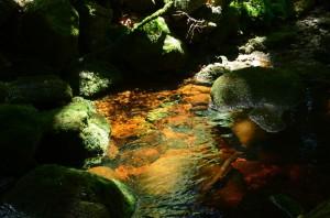 Lichtkunst in Schattenrahmen – © VDNChristine R. Sigl - Bayerischer Wald
