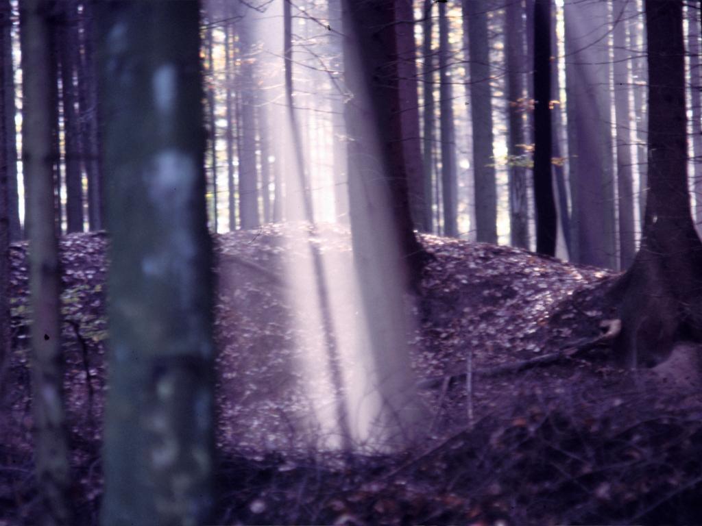 Lichtstreifen – © VDNMichael Stange – Hessischer Spessart