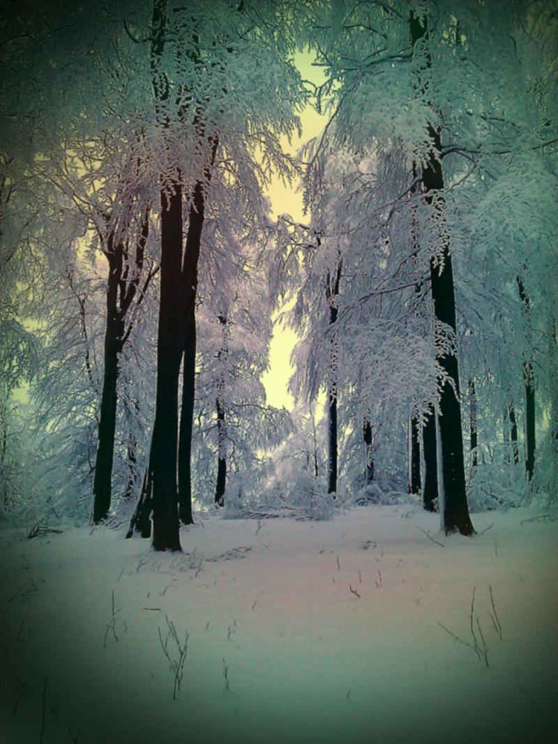 Meißner im Schnee – © VDNTimo Ippensen - Meißner-Kaufunger Wald