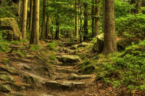 Klicken Sie auf das Bild des Tages im Fotoportal: Mitten durch – © VDNbikender - Zittauer Gebirge