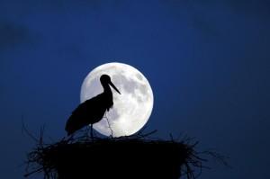 Klicken Sie auf das Bild des Tages im Fotoportal: Mondsüchtig – © VDNblum - Lauenburgische Seen