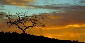 Klicken Sie auf das Bild des Tages im Fotoportal: Morgendämmerung – © VDNThalhäuser - Stromberg-Heuchelberg