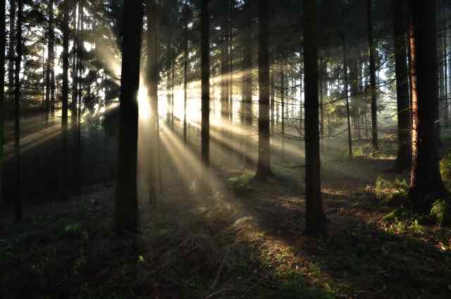 Klicken Sie auf das Bild des Tages im Fotoportal: Morgenlicht – © VDNHans-Jürgen Schmidt - Nördlicher Oberpfälzer Wald