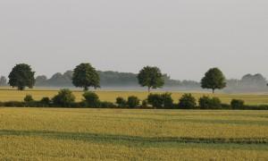 Morgennebel_ VDNFriedrich J. Flint_ Lauenburgische Seen