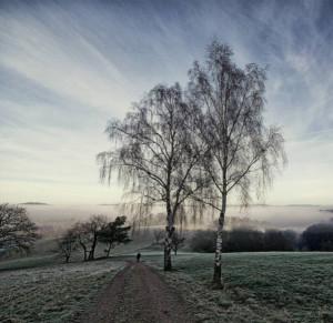 Klicken Sie auf das Bild des Tages im Fotoportal: Morgens im Odenwald – © VDNAndrea Dies - Bergstraße-Odenwald