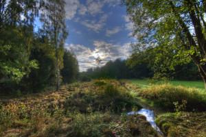 Klicken Sie auf das Bild des Tages im Fotoportal: Morgen's im Wald – © VDNNorbert Schreiber - Steinwald