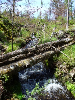 Naturkraft in wilder Schönheit – © VDNChristine R. Sigl – Bayerischer Wald