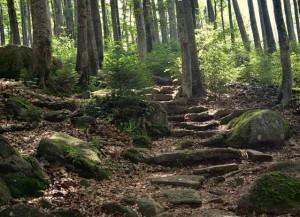 Klicken Sie auf das Bild des Tages im Fotoportal: Naturtreppengestaltung –© VDNChristine R. Sigl – Bayerischer Wald