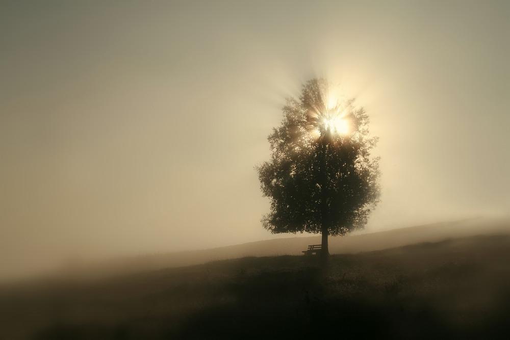 Nebelmorgen an einsamer Lieblings-Birke_ VDNUlrike Sobick_ Südschwarzwald