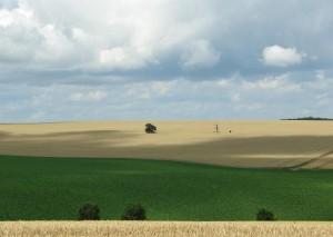 Klicken Sie auf das Bild des Tages im Fotoportal: Neuzeitfeldraine – © VDNJohannes Brenner - Habichtswald
