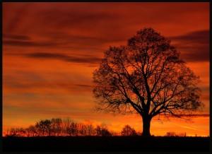 Klicken Sie auf das Bild des Tages im Fotoportal: Novembermorgen – © VDNburmafu - Schwarzwald MitteNord