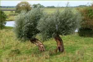 Klicken Sie auf das Bild des Tages im Fotoportal: Olivenhain-Feeling an der Elbe – Dumont – VDNUlrike Sobick - Mecklenburgisches ElbetalBiosphärenreservat Flusslandschaft Elbe M-V