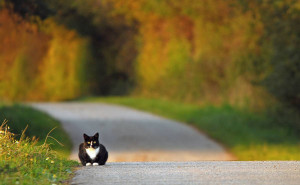 Klicken Sie auf das Bild des Tages im Fotoportal: Ruhige Wege – © VDN Paul H.- Lauenburgische Seen