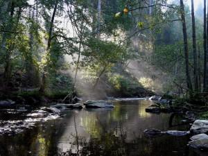 Rur im Herbst – © VDNP.Stollenwerk – Deutsch-Belgischer Naturpark Hohes Venn - Eifel