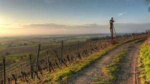 Klicken Sie auf das Bild des Tages im Fotoportal: Sandstein-Kreuz im Weinberg2 – © VDNdietmar tunk - Spessart