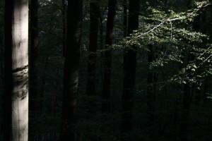 Klicken Sie auf das Bild des Tages im Fotoportal: Schattenspiele 2 – © VDNliesen - Ebbegebirge