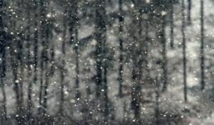 Schneefall – © VDNJörg Willems - Rothaargebirge