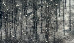 Klicken Sie auf das Bild des Tages im Fotoportal: Schneefall – © VDNJörg Willems - Rothaargebirge