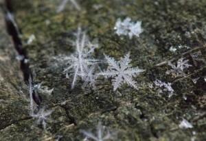 Schneeflocke – © VDNYK - Deutsch-Belgischer Naturpark Hohes Venn - Eifel