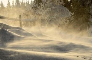 Klicken Sie auf das Bild des Tages im Fotoportal: Schneesturm – © VDNET - Schwarzwald MitteNord