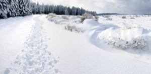 Klicken Sie auf das Bild des Tages im Fotoportal: Schneewanderung – © VDNRaimund Knauf - Deutsch-Belgischer Naturpark Hohes Venn - Eifel