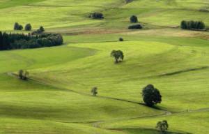 Klicken Sie auf das Bild des Tages im Fotoportal: Schwungvoll durch die frisch gemähten Weiden – © VDNUlrike Sobick - Südschwarzwald