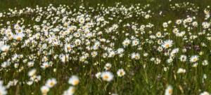 Klicken Sie auf das Bild des Tages im Fotoportal: Sommerblumen – Wiese – © VDNWerner - Hessische Rhön