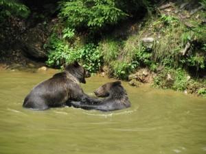 Sommerwasserspiele – © VDNChristine R. Sigl - Bayerischer Wald
