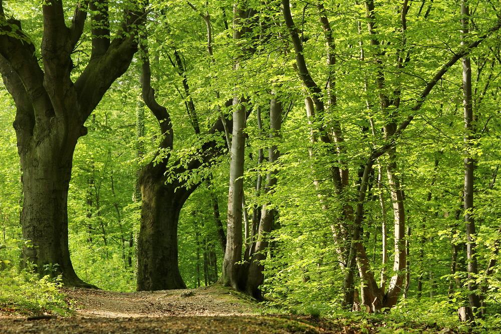 Sonnendurchflutetes Frühlingsgrün... – © VDNUlrike Sobick - Rheinland