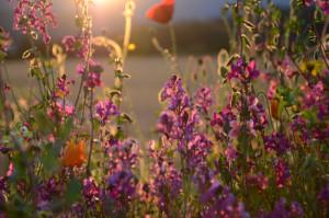 Klicken Sie auf das Bild des Tages im Fotoportal: Spätsommer im Fichtelgebirge – © VDNKatharina Meyer - Fichtelgebirge
