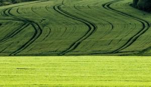 Klicken Sie auf das Bild des Tages im Fotoportal: Spuren im Kornfeld – © VDNWerner - Hessische Rhön