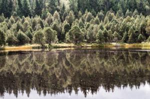 Klicken Sie auf das Bild des Tages im Fotoportal: Still spiegelt der See... – © VDNWolfEf - Südschwarzwald