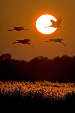Klicken Sie auf das Bild des Tages im Fotoportal: Sunset –© VDNThomas Hinsche - Dümmer