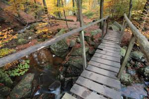 Klicken Sie auf das Bild des Tages im Fotoportal: Ternellbach – © VDNRaimund Knauf - Deutsch-Belgischer Naturpark Hohes Venn - Eifel