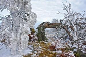 Klicken Sie auf das Bild des Tages im Fotoportal: Torso – © VDNJürgen Holzhausen - Bayerische Rhön