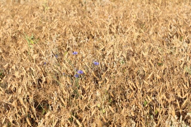 Klicken Sie auf das Bild des Tages im Fotoportal: Trockenheit – © VDNBrezina Peter – Fichtelgebirge