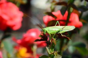 Klicken Sie auf das Bild des Tages im Fotoportal: Verirrt in meinen Garten – © VDNHerbert 01 – Schwalm-Nette