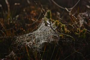 Klicken Sie auf das Bild des Tages im Fotoportal: Verwirrung – © VDNJürgen Holzhausen - Bayerische Rhön